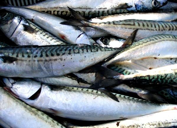 """Pas plus d'occitan """"en force"""" dans les lycées niçois que de sardine pour boucher le port de Marseille (photo MN)"""