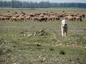 2000 ans de pastoralisme pour créer un écosystème unique. Combien d'années pour le recréer ? (photo MN)