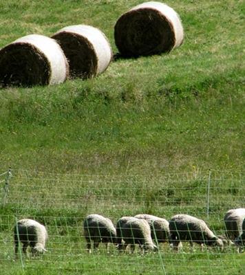 C'est dans l'agriculture que les espoirs d'emplois sont les plus importants (photo MN)