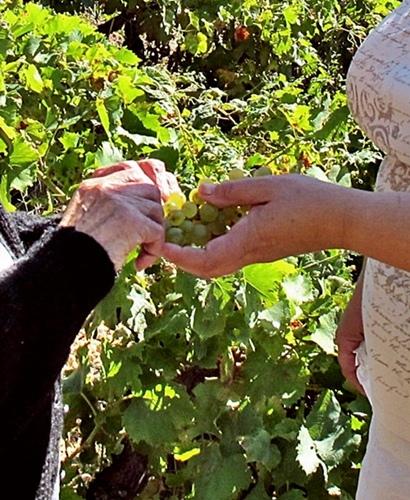 D'une génération à l'autre, on passe raisin, savoir-faire, et sens de la convivialité (photo MN)