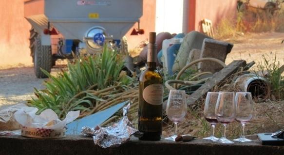 A partir de 2016 les droits à planter seraient supprimés par l'Union Européenne. N'importe qui n'importe où pourrait faire n'importe quel vin (photo MN)