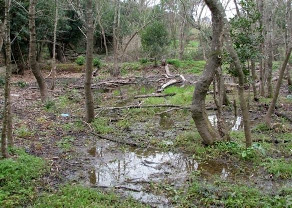 Moulières, Mollières...ce nom de lieu signe des eaux résurgentes, en Vaucluse comme ailleurs en Provence; ici à La Seyne (83) (Photo MN)