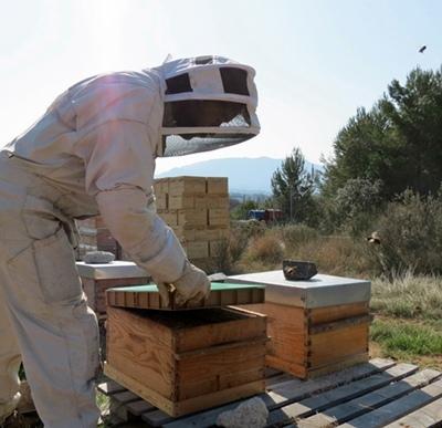 Un apiculteur provençal a en moyenne 63 ruches, mais 72% sont des amateurs éclairés qui en possèdent moins de dix (photo MN)