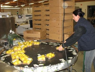 La société s'était fait une spécialité des produits bio exotiques (photo MN)