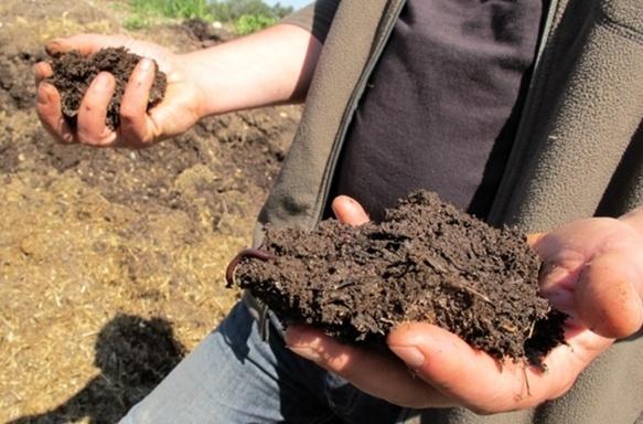 Les légumes de la cantines amenderaient les terres des paysans qui les fournissent avec ces petites bêtes rampantes (photo MN)