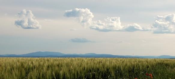 Una plana, de sèra (photo Daumas DR)
