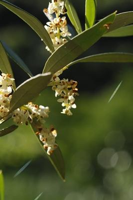 L'élixir floral est revigorant (photo FFB DR)