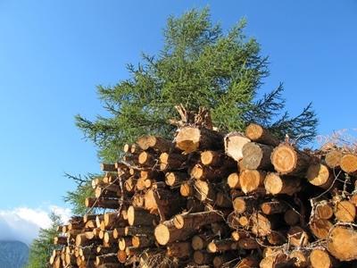 La filière bois...n'en est pas une. Trop de contradictions entre l'intérêt des producteurs en amont, et des utilisateurs en aval (photo MN)