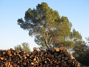 L'économie du bois en Provence Alpes Cote d'Azur prépare son essor et craignait de voir un unique opérateur capter toute la ressource en imposant son prix (photo MN)