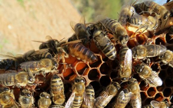 Sur les hauteurs de Martigues, l'association de surveillance de l'air Air Paca, installe aussi ses ruches. Le but, établir une corrélation entre qualité de l'air et santé des abeilles (photo MN)
