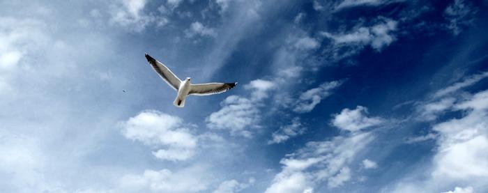 Cris d'oiseaux, insectes et vagues feront la base sonore de Sud (photo MN)