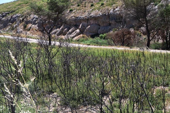Si les uns penchent pour l'intervention minimale et les autres pour une action humaine renforcée, tous conviennent de l'intérêt de notre forêt méditerranéenne (photo MN)