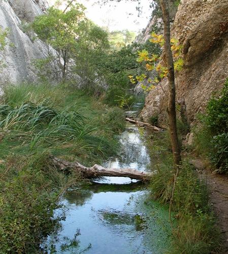 Terroirs boisés et parcourus de ruisseaux avec des eaux calmes et non polluées, c'est le terrain favorable aux salamandres (photo MN)