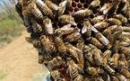 Lei pesticides esmarran leis abelhas