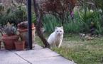 De bicilistas, de vesinas e de chats