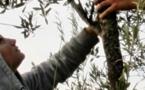 L'agricultura a patit de l'incendi d'Orgon e Senàs