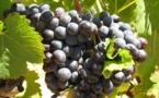 Vin: convivialité d'abord et qualité toujours