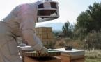 Malèstre per leis apicultors provençaus