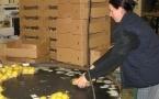 Pro Natura : lo lider provençau dau biò trepeja per lo premier còp