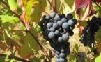 Lenga, vin e cultura d'òc dins droma