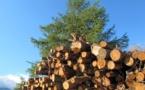 L'activitat boscatiera provençala  a l'agachon d'un projèct industriau