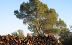 E.ON cromparà pas tant de bòscs provençaus